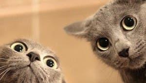 dos-gatos-divertidos-mirando
