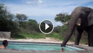elefante-fiesta-piscina