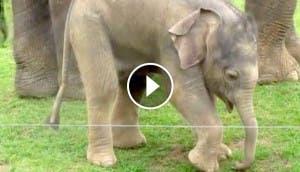 elefante-primeros-pasos-play