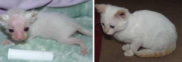 gatitos lastimados (11)