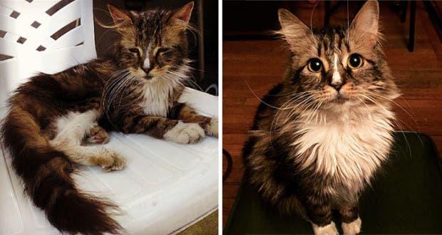 gatitos lastimados (12)