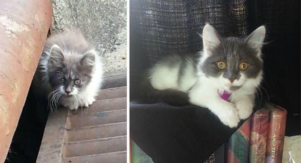 gatitos lastimados (13)