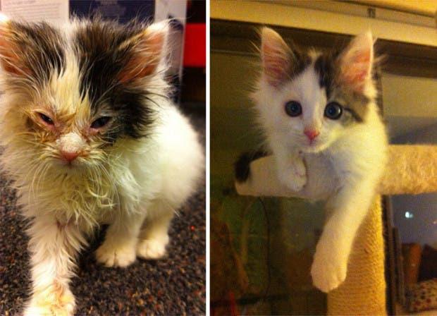 gatitos lastimados (2)