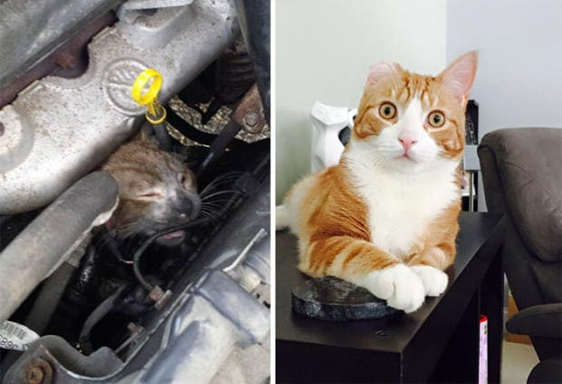 gatitos lastimados (4)