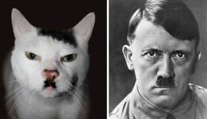 gato-parecido-hitler