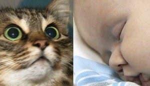 gato-salva-bebe