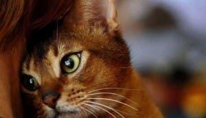 gatos-cariñosos