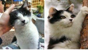 gatos-nariz-corazon