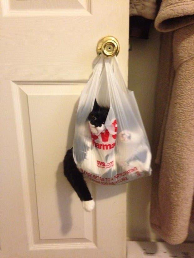 gatos que tomaron malas decisiones (1)