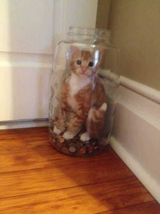 gatos que tomaron malas decisiones (12)