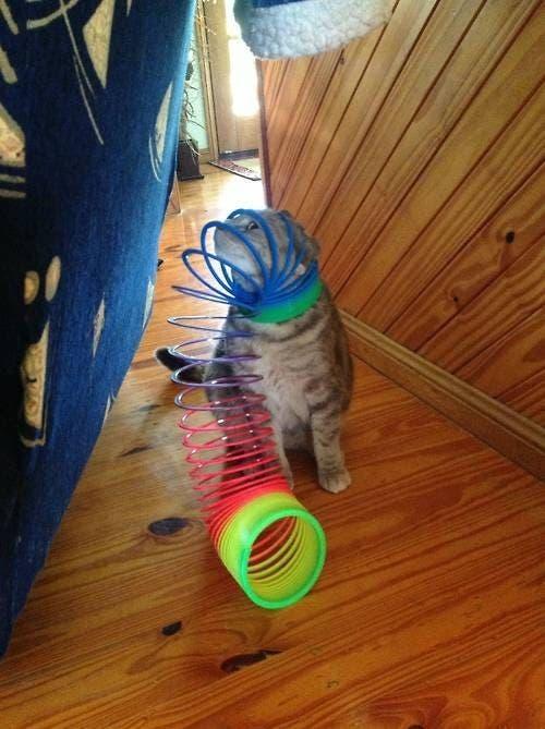 gatos que tomaron malas decisiones (13)