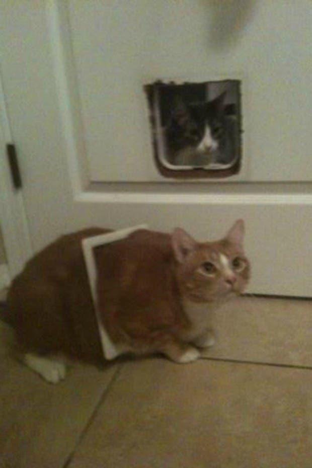 gatos que tomaron malas decisiones (18)