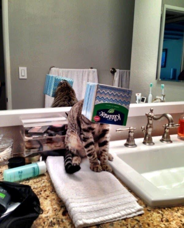 gatos que tomaron malas decisiones (4)