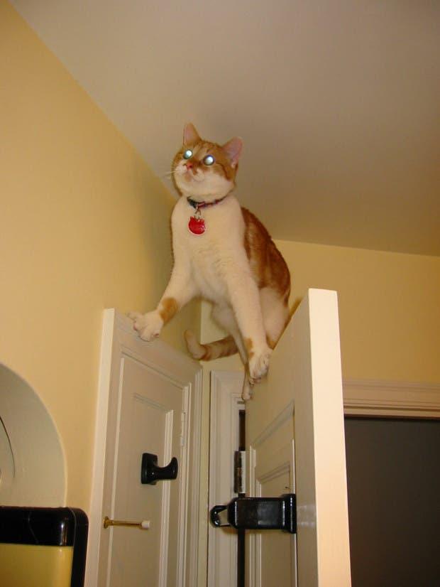gatos que tomaron malas decisiones (8)