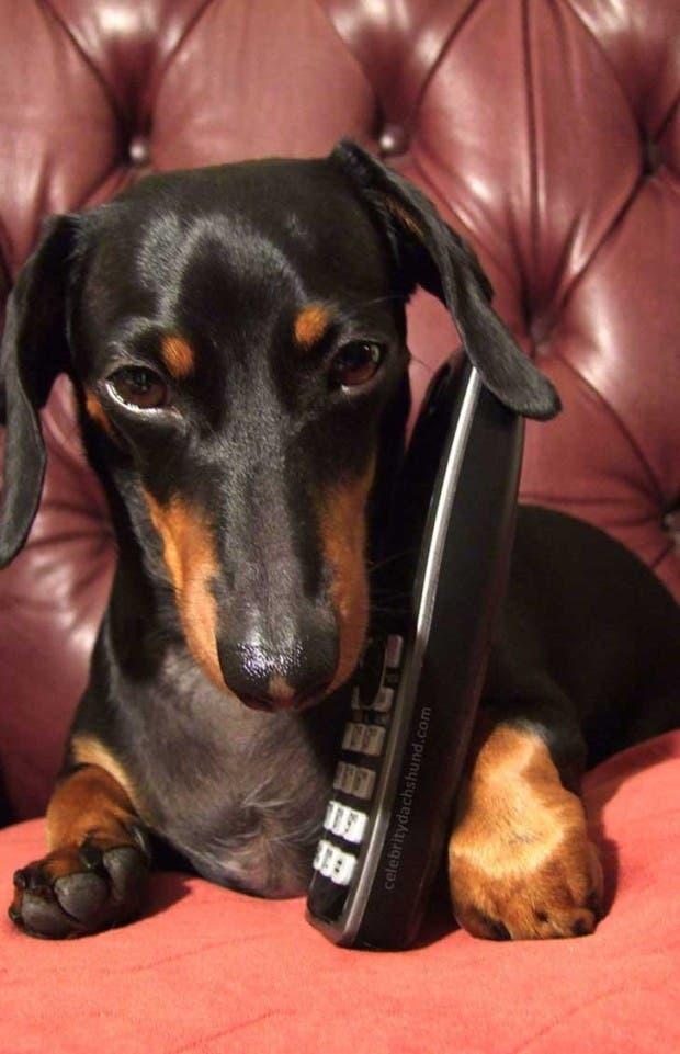 gente que tiene perros sabe (13)