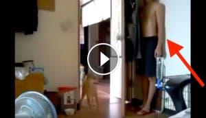 hombre-juega-escondite-perros-play