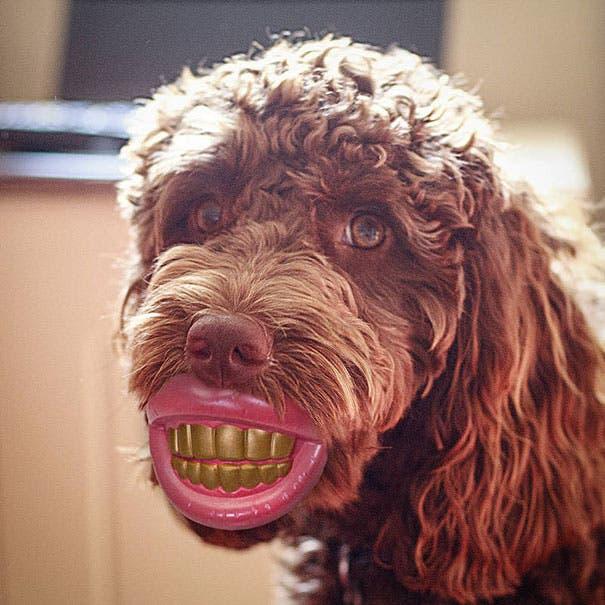 juguetes de perro graciosos (12)
