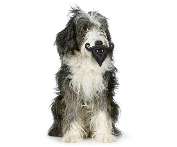 juguetes de perro graciosos (14)