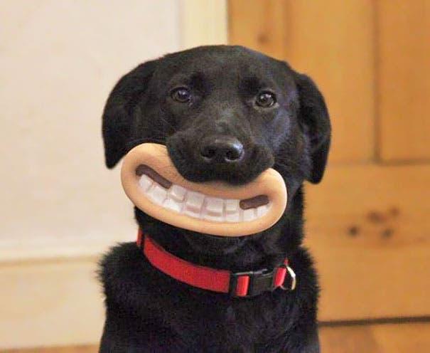 juguetes de perro graciosos (2)