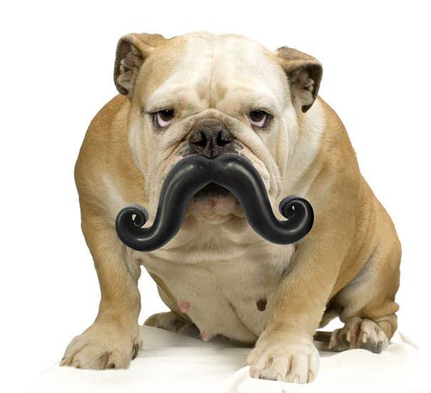 juguetes de perro graciosos (3)