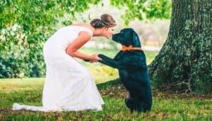 mascotas-bodas-fotos
