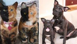 mascotas-clonadas