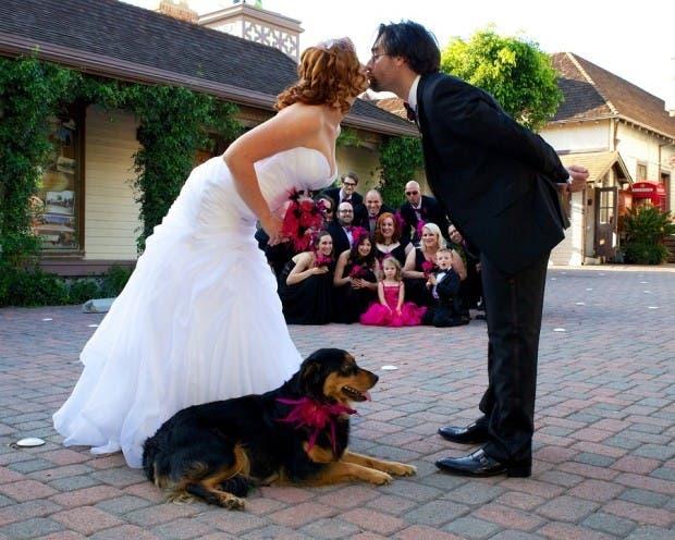 mascotas en las bodas (11)