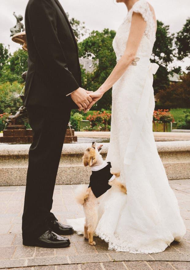mascotas en las bodas (13)
