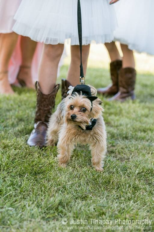 mascotas en las bodas (14)