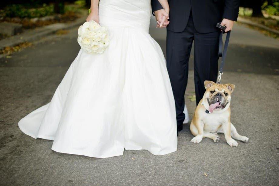 mascotas en las bodas (18)