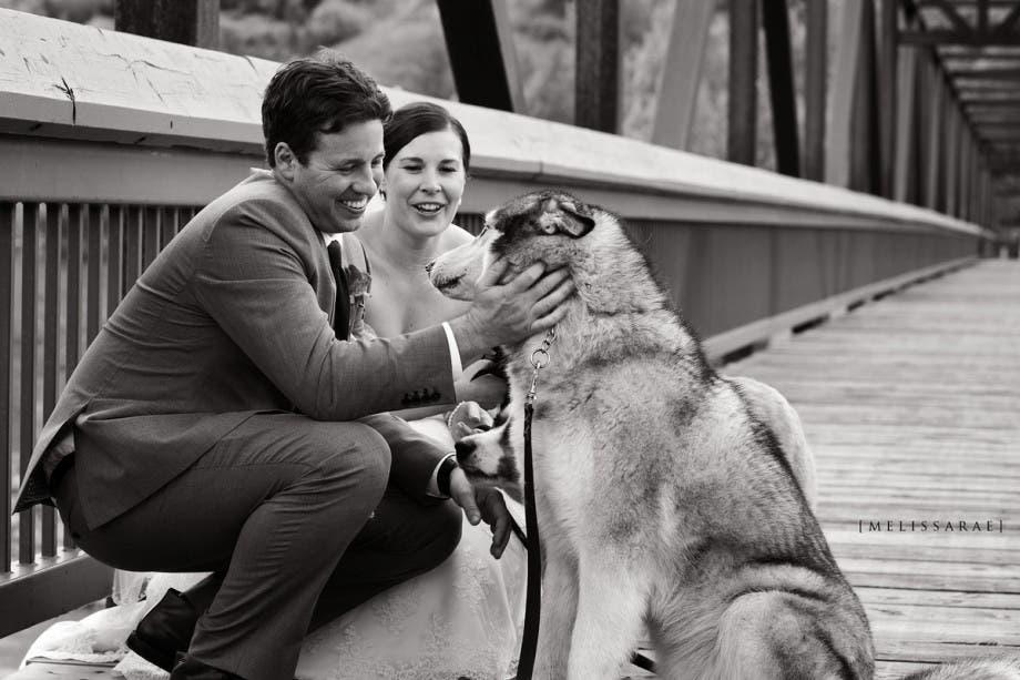mascotas en las bodas (19)