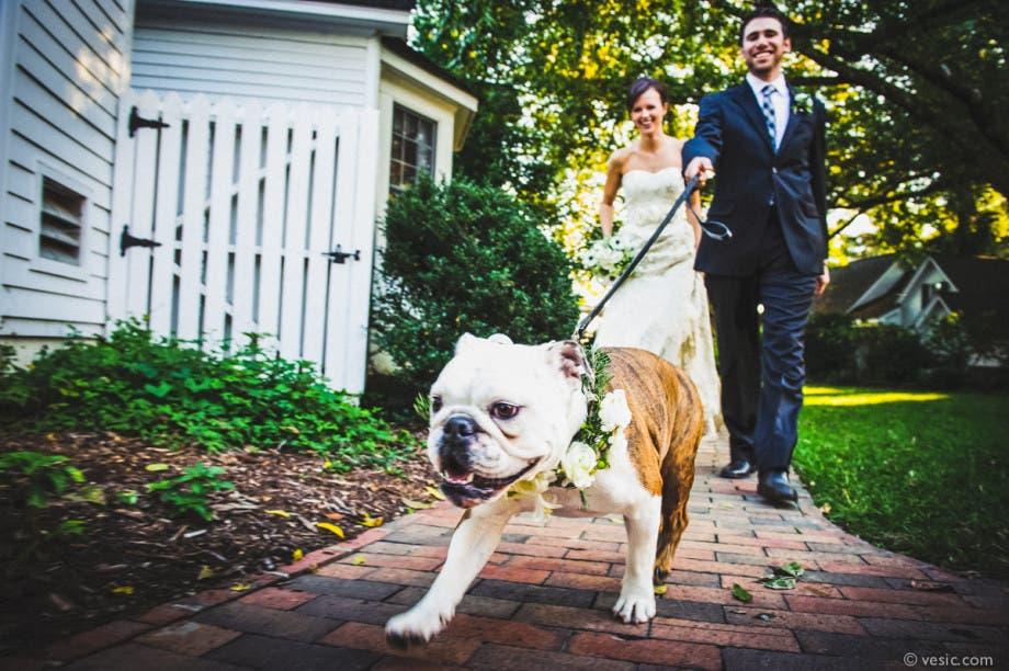 mascotas en las bodas (3)