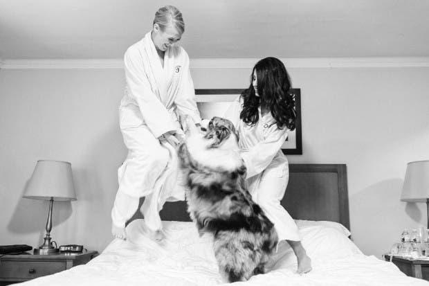 mascotas en las bodas (6)