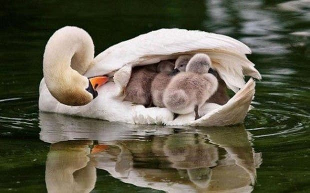maternidad-animales-03