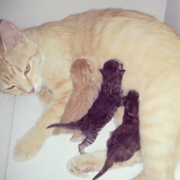 maternidad-animales-04