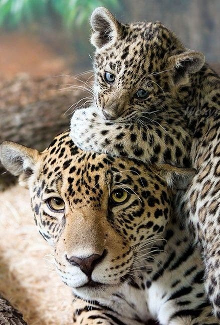 maternidad-animales-05