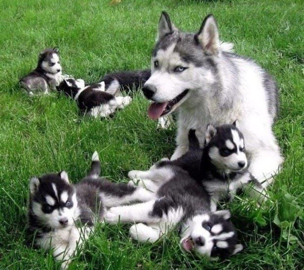 maternidad-animales-08