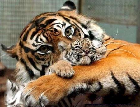 maternidad-animales-15