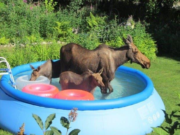 maternidad-animales-17