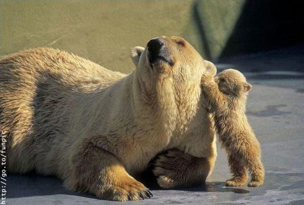 maternidad-animales-22