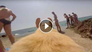 perro-corre-playa-gopro