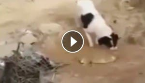 perro-entierra-a-otro-play