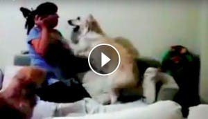 perro-evita-pegar-nino