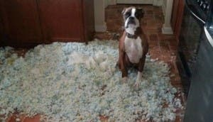 perro-travesuras-
