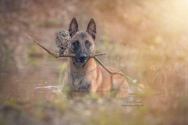 perro-y-buho-amigos-1