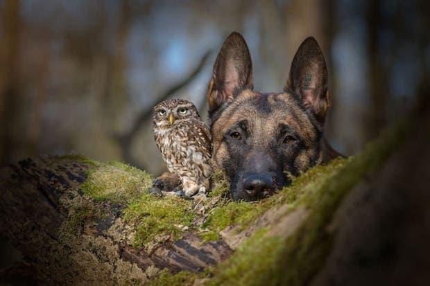 perro-y-buho-amigos-2