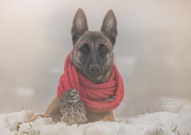 perro-y-buho-amigos-4