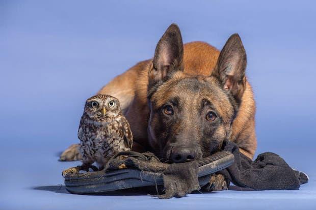 perro-y-buho-amigos-5