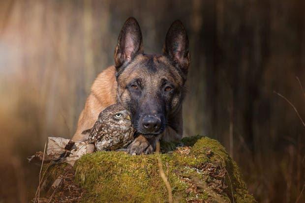 perro y buho df