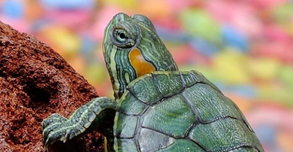 tortugas (2)